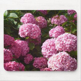 Rosa vanlig hortensia musmatta