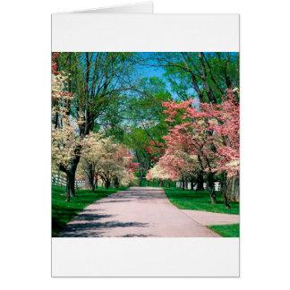 Rosa vitDogwood Lexington Kentucky för träd Hälsningskort