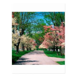 Rosa vitDogwood Lexington Kentucky för träd Vykort