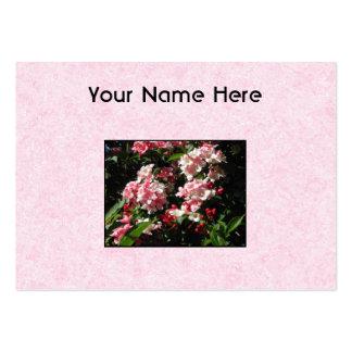 Rosa Weigelablommor. På pink. Set Av Breda Visitkort
