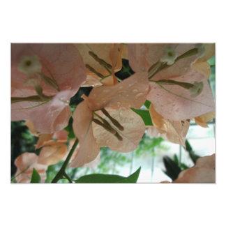 Rosan blommar upp slut fototryck