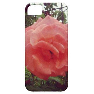 Rosaträdgården steg iPhone 5 fodraler