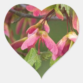 Rosor påskyndat Sycamorefrö - Acer pseudoplatanus Hjärtformat Klistermärke