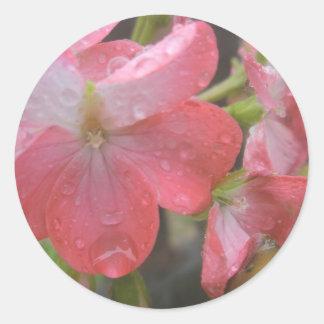 Rosor regnar runt klistermärke
