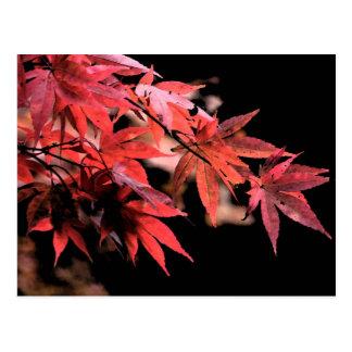 Rött Acer kort