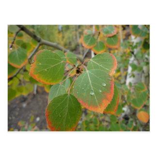 rött grönt asp- löv vykort