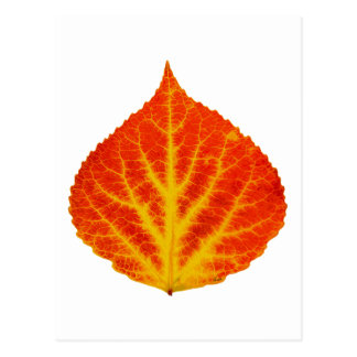 Rött & gult asp- löv #10 vykort