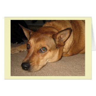 Rött Heeler nötkreatur förföljer - ranchhund Hälsningskort