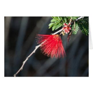 Rött kort för hälsning för ökenvildblomma