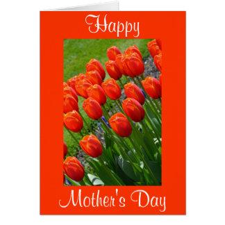 Rött kort för tulpanmors daghälsning