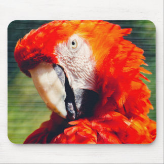 Rött Macawpapegojaporträtt, exotisk fågel Musmatta