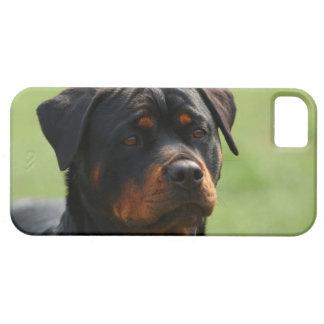 Rottweiler iPhone 5 Case-Mate Skal