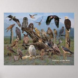 Rovfåglar av väster poster