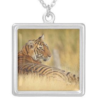 Royale Bengal tigersitta utanför Silverpläterat Halsband