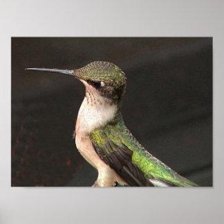 Ruby-Throated Hummingbird 2002-0079b Poster