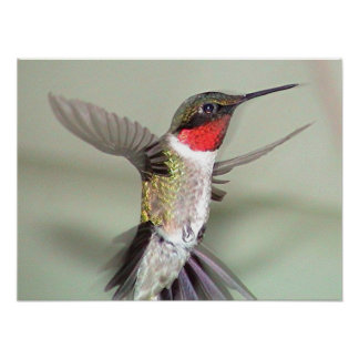 Ruby-Throated Hummingbird 2003-0082a Poster