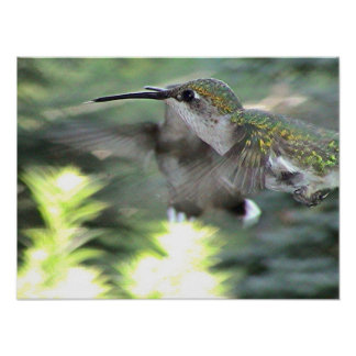 Ruby-Throated Hummingbird 2005-0413a Poster