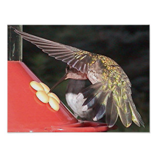 Ruby-Throated Hummingbird 2005-0558a Poster