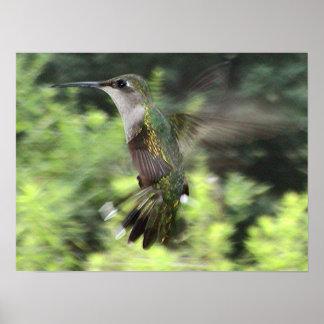 Ruby-Throated Hummingbird 2005-0607 Poster