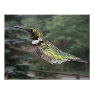Ruby-Throated Hummingbird 2005-0702a Poster