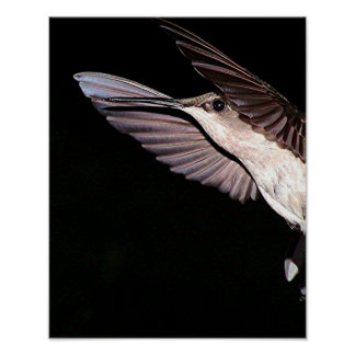 Ruby-Throated Hummingbird 2005-177a Poster