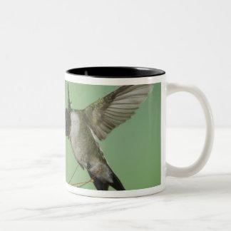 Ruby-throated Hummingbird, Archilochus 2 Två-Tonad Mugg