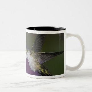 Ruby-throated hummingbird i flyg på thistlen Två-Tonad mugg