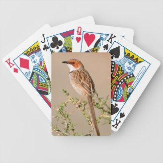 Rufous-Gå i ax sångare (den Malcorus pectoralisen) Spelkort