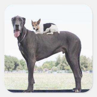 Russell terrier på great dane baksida fyrkantigt klistermärke