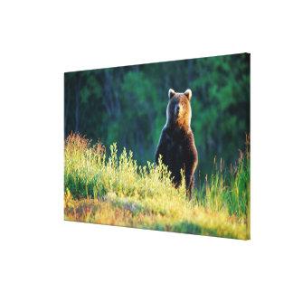 Ryssland Kamchatka, grizzly av Kroska Canvastryck