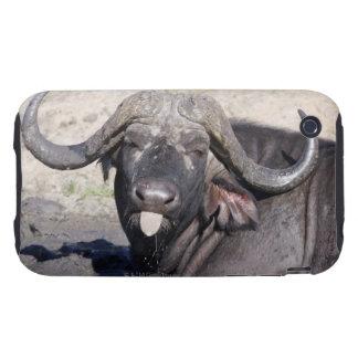 Sabi Sands naturvården, Mpumalanga landskap, 2 Tough iPhone 3 Cases