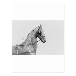 Saddlebred tillförsel!! vykort