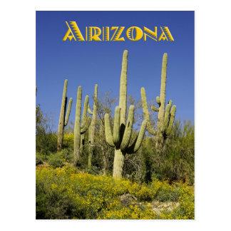 Saguarokaktus och gula vildblommar, Arizona Vykort
