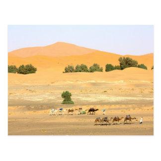 Sahara öken - kamel och Erg Chebbi Vykort