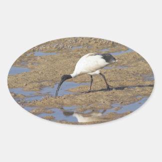 Sakrala Ibis Ovalt Klistermärke