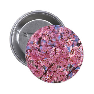 Sakura rosa körsbärsröd blommarhimmel standard knapp rund 5.7 cm