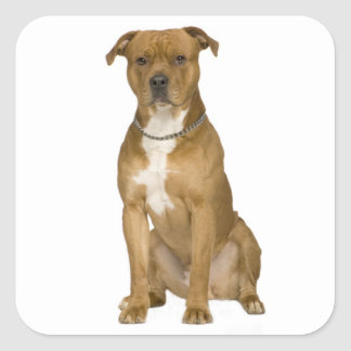 Sälar för klistermärke för hund för