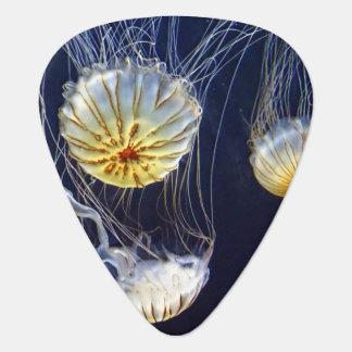 Salt vattenmanet för exotisk flotta plektrum