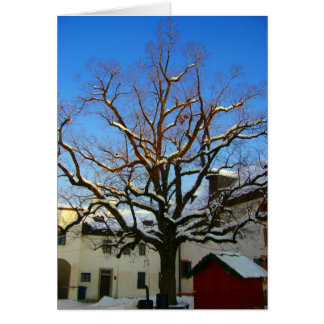 salzburg snöträd hälsningskort