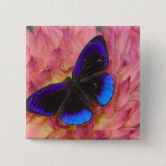 Sammamish Washington fotograferar av fjäril 18 Standard Kanpp Fyrkantig 5.1 Cm