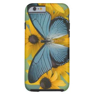 Sammamish Washington fotograferar av fjäril 22 Tough iPhone 6 Fodral