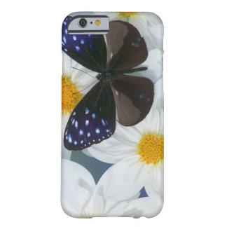 Sammamish Washington fotograferar av fjäril 33 Barely There iPhone 6 Fodral