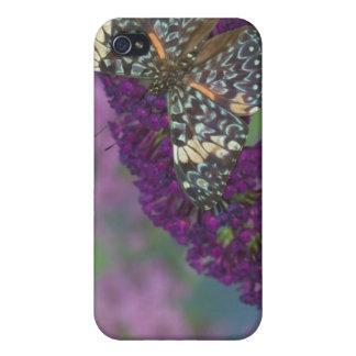 Sammamish Washington fotograferar av fjäril 35 iPhone 4 Fodraler