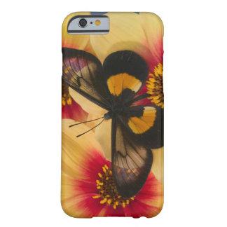 Sammamish Washington fotograferar av fjäril 39 Barely There iPhone 6 Skal