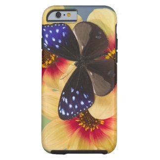 Sammamish Washington fotograferar av fjäril 40 Tough iPhone 6 Case