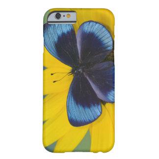 Sammamish Washington fotograferar av fjäril 44 Barely There iPhone 6 Fodral