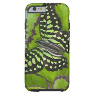 Sammamish Washington fotograferar av fjäril på 11 Tough iPhone 6 Skal