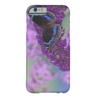 Sammamish Washington fotograferar av fjäril på 12 Barely There iPhone 6 Fodral