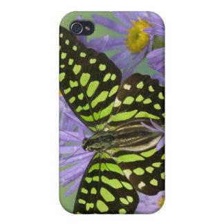 Sammamish Washington fotograferar av fjäril på 16 iPhone 4 Fodral