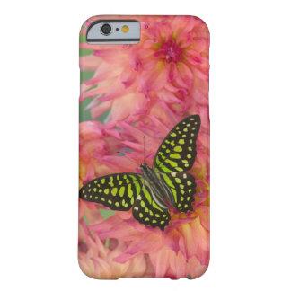 Sammamish Washington fotograferar av fjäril på 3 Barely There iPhone 6 Fodral